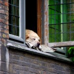 Co je potřeba zajistit pro psa žijícího na zahradě